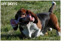 créer un forum : basset hound aventures - Portail P01610