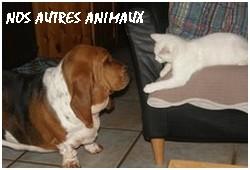 créer un forum : basset hound aventures - Portail P01810