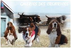 créer un forum : basset hound aventures - Portail P02110