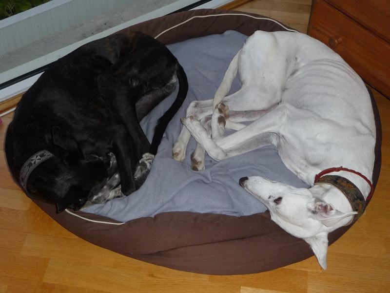 Posture originale pour dormir....et chez vous c'est comment??? - Page 3 P1040411