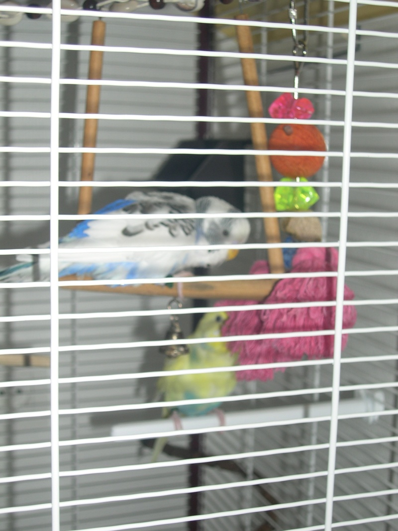Ma nouvelle cage Dscn6014