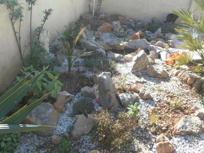 le jardin de syljou - Page 2 Sam_8514