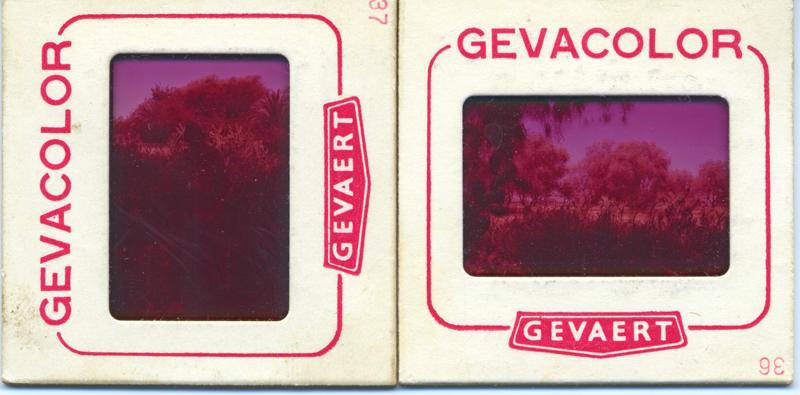 Balades Sahariennes d'un Technicien - Page 3 Gevaco10
