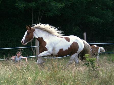 Les Gypsygael!! Img_2012