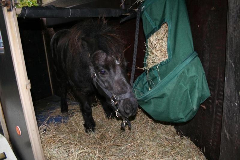 KIRIKOU - ONC poney né en 2003 - adopté en mars 2009 par Asa et fick63 - Page 2 Img_9612