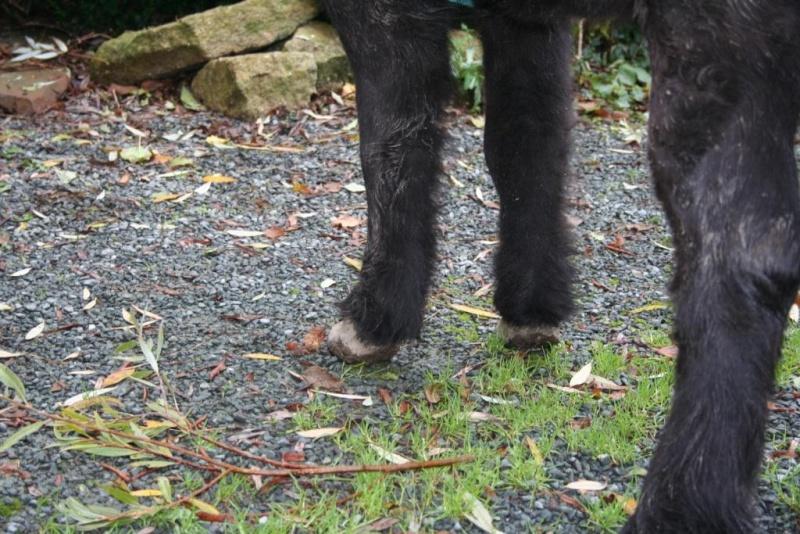 KIRIKOU - ONC poney né en 2003 - adopté en mars 2009 par Asa et fick63 - Page 3 Photo_11