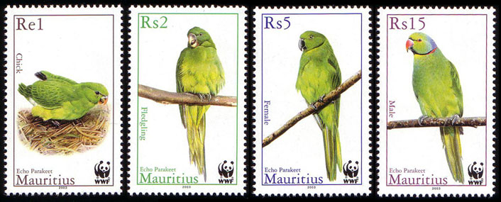 Vögel Mu096310