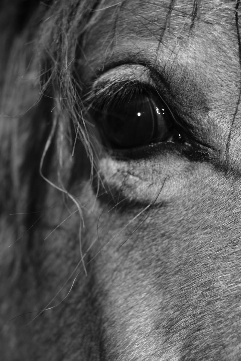 """Concours photo """" oeil de chevaux"""" venez votez ! Dsc05111"""