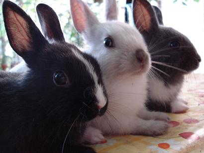Un lapin et un chat partageant le même repas Adulte10