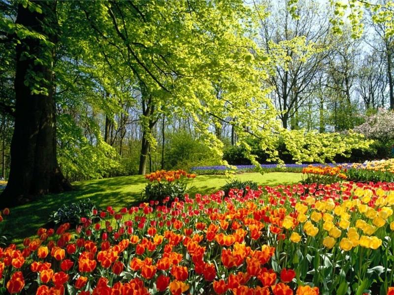 Merveilles de la nature. - Page 13 Tulipe10