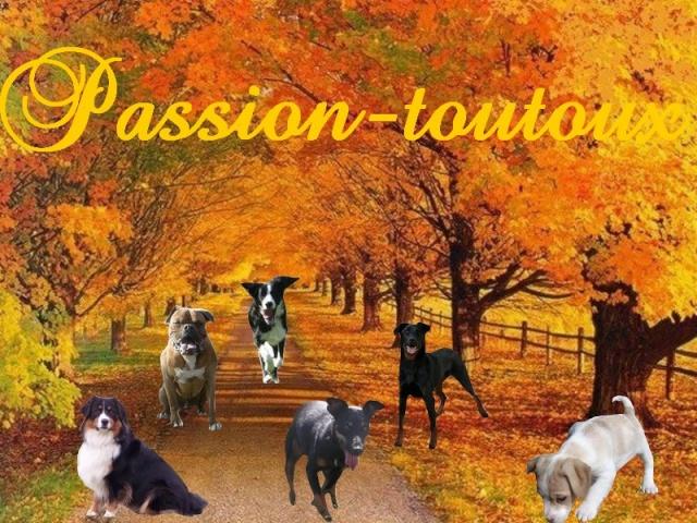 passion-toutoux