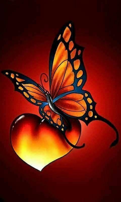 superbes papillons! - Page 2 1d5e2810