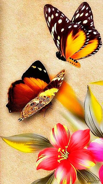 superbes papillons! - Page 2 31d5c610
