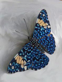 superbes papillons! - Page 2 5608af11