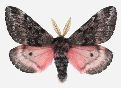 superbes papillons! - Page 2 C05d8510