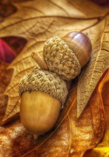 L'automne Fb_img15