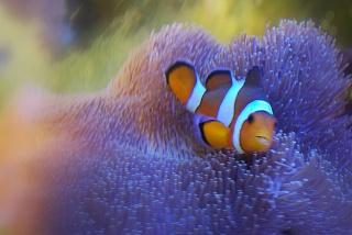 Le bac des Maniacodesrécifs (méthode Reefcorner) - Page 2 Dsc_0810