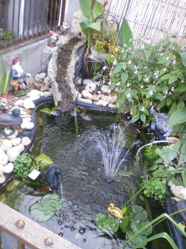 Aménagements du bassin! Imgp4211