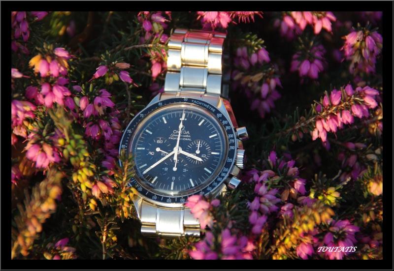 Daytona - Quelle est la montre qui a fait votre joie en 2008 ? - Page 4 Imgp2012