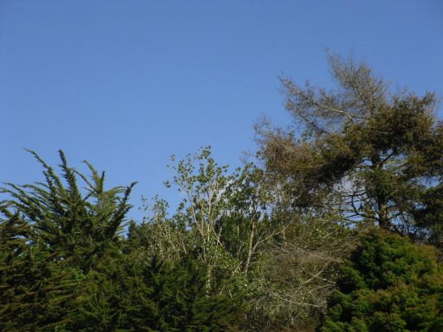Echange Petit Bleu, comme le ciel de mai (?)  -  ** ECHANGE  TERMINE ** - Page 6 Sdc13510