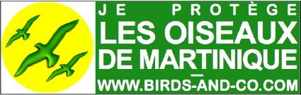 forum d'oiseaux !fleur Sticke10