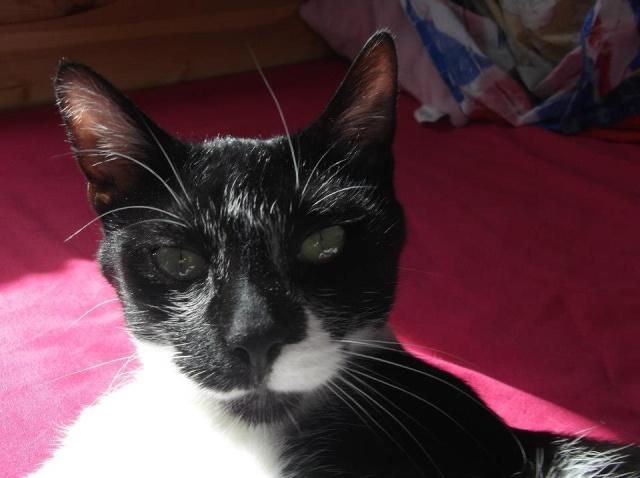 Noisette - femelle noire plastron blanc, 1 an (76) 72976_10