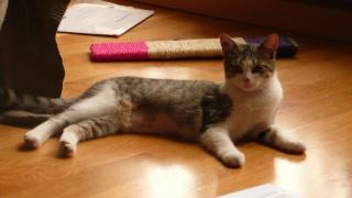3 chatons, 2 filles, 1 mâle, 3, 5 mois - Page 7 P1020810