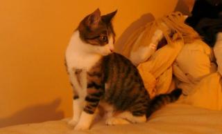 3 chatons, 2 filles, 1 mâle, 3, 5 mois - Page 7 P1020813