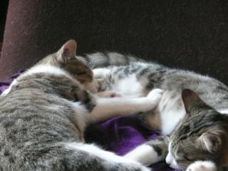 3 chatons, 2 filles, 1 mâle, 3, 5 mois - Page 7 P1020911