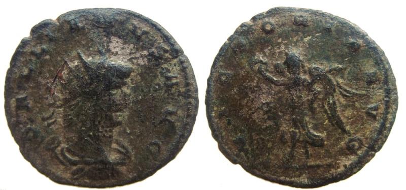 Gallien Herculi Cons Avg (sanglier) ++ 01111