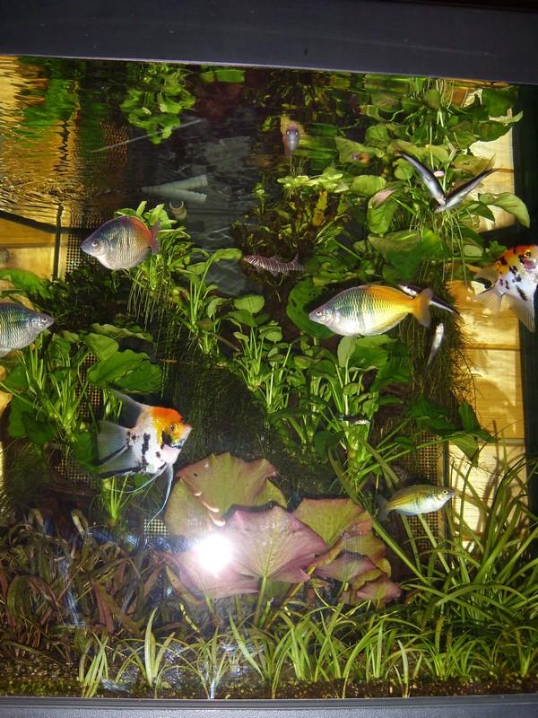 Plantes faciles pour aquarium? Aquari10