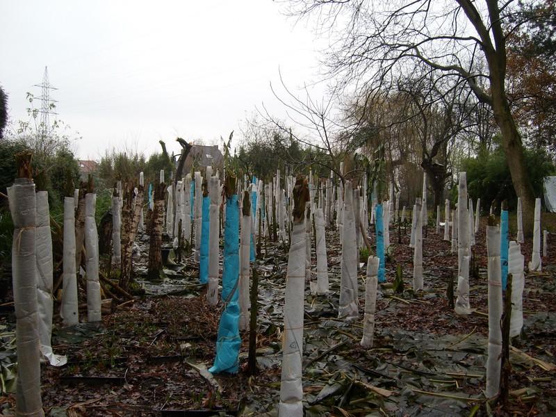 Matériaux pour les silos des protections hivernales pour musa Musa_b11