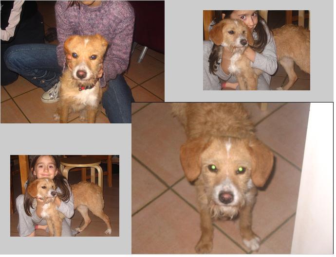 OXY, 2 ans, Femelle, Griffonne Oxy1_s10