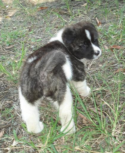 3e Portée de Ludsyga : Patsy x Buck (08/11/07) - pour les maitres de Patsy 2007-146