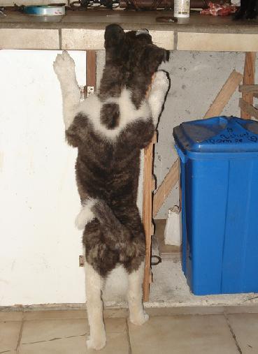 3e Portée de Ludsyga : Patsy x Buck (08/11/07) - pour les maitres de Patsy 2008-024