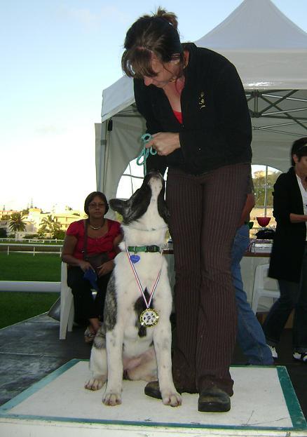 3e Portée de Ludsyga : Patsy x Buck (08/11/07) - pour les maitres de Patsy 2008-031