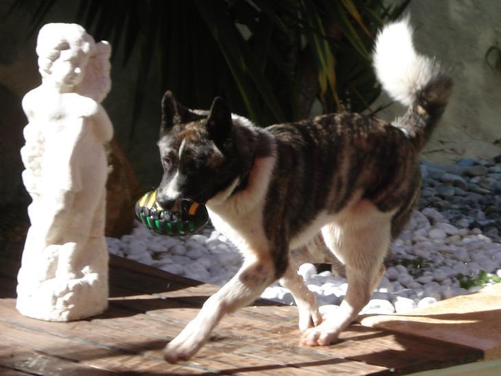 3e Portée de Ludsyga : Patsy x Buck (08/11/07) - pour les maitres de Patsy 2008-035