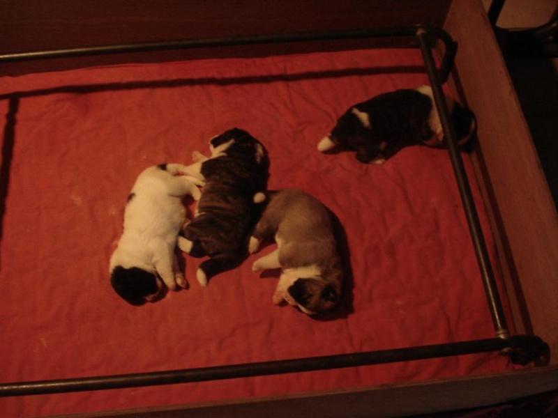 3e Portée de Ludsyga : Patsy x Buck (08/11/07) - pour les maitres de Patsy 2010-014