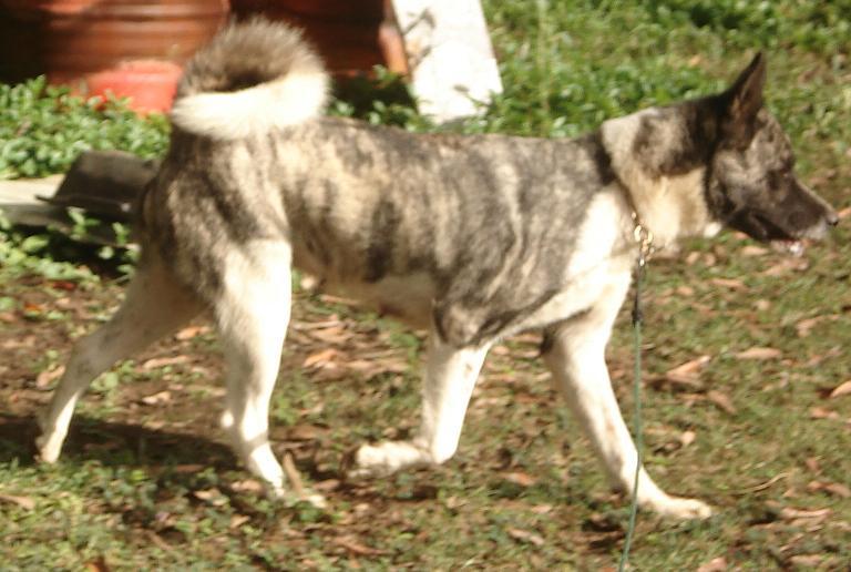 3e Portée de Ludsyga : Patsy x Buck (08/11/07) - pour les maitres de Patsy 2010-018