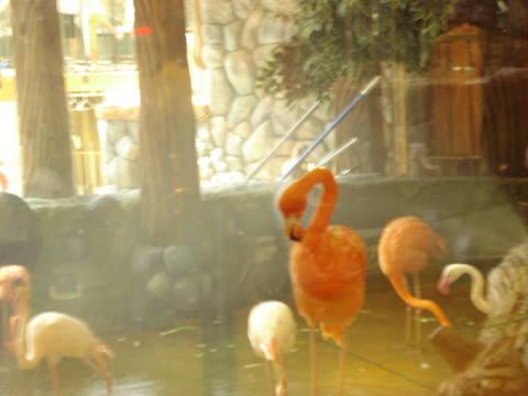 Concour photo: Thème: Oiseaux ( Du 10 au 17 novembre ) - Page 2 Dsc00110