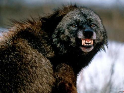 Páginas para descargar torrents en 2020 Wolf10