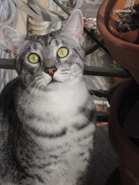 E'Sethi Accuente, le chaton voyageur - Page 10 25081310