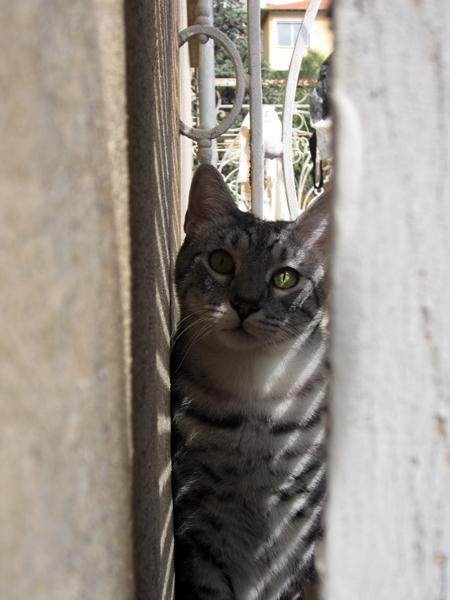 E'Sethi Accuente, le chaton voyageur - Page 10 25081311