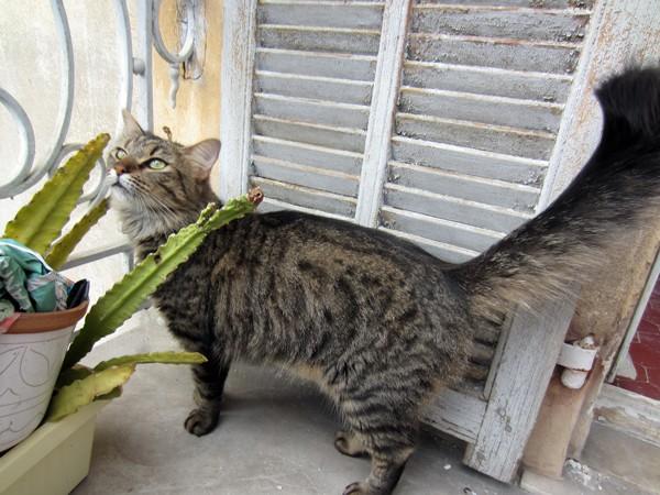 E'Sethi Accuente, le chaton voyageur - Page 10 25081314