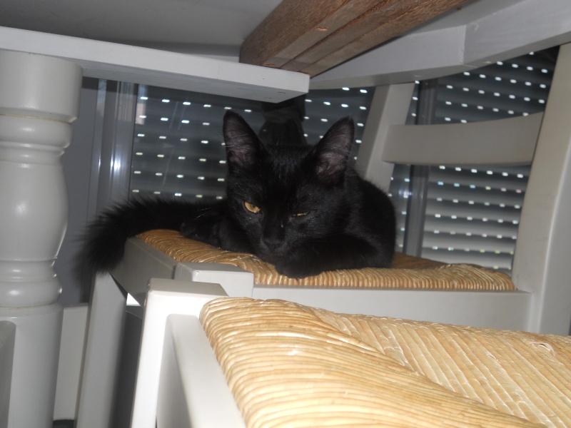 EBENE, magnifique chaton noir de 5 mois, IE n° 250268730226363 Dscn1915