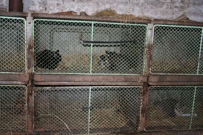 Sauvetage de 2 chats en sud charente Chatcl10