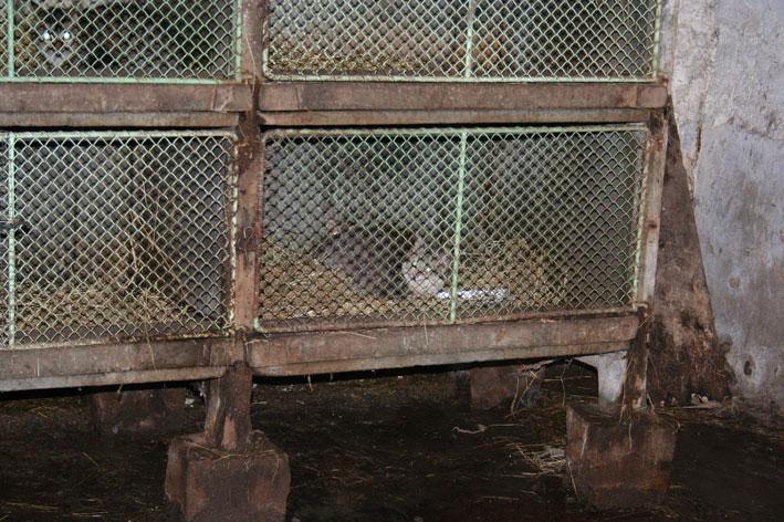 Sauvetage de 2 chats en sud charente Chatcl11