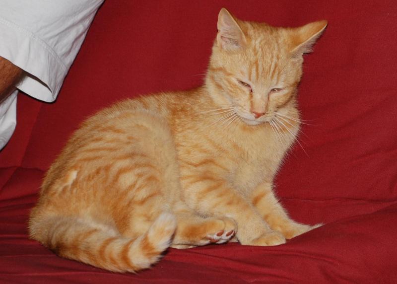 Des nouvelles du chat FRIMOUSSE rebaptisé LEON Leon10