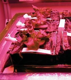 Les astronautes de l'ISS mangeront bientôt de la salade spatiale   De-la-10