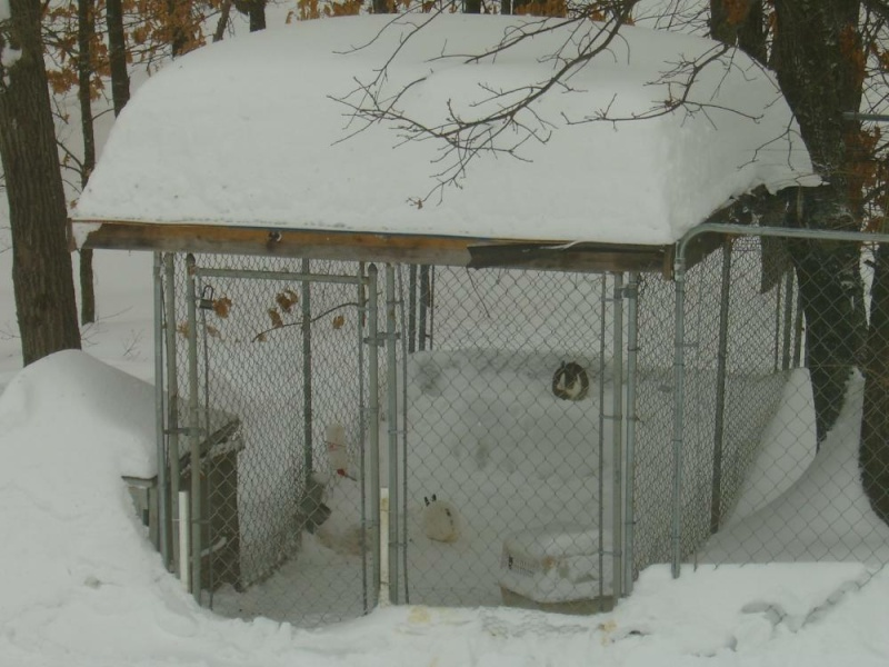 SNOW and lots of it - Page 2 Cage10